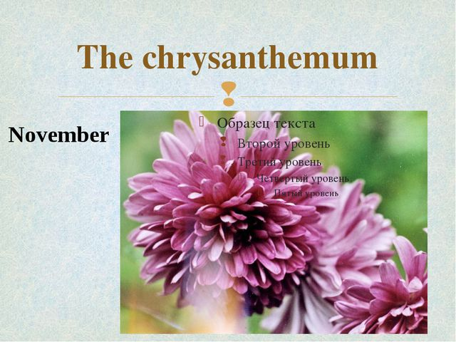 The chrysanthemum November 