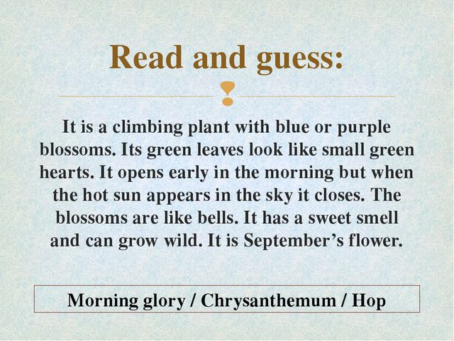 Read and guess: It is a climbing plant with blue or purple blossoms. Its gree...