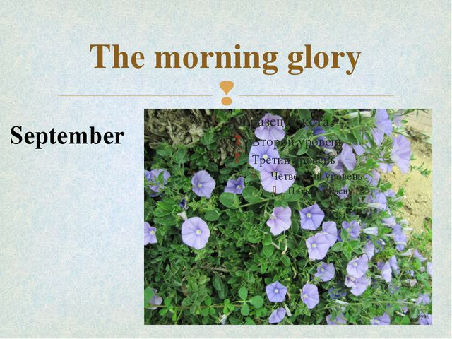 The morning glory September 