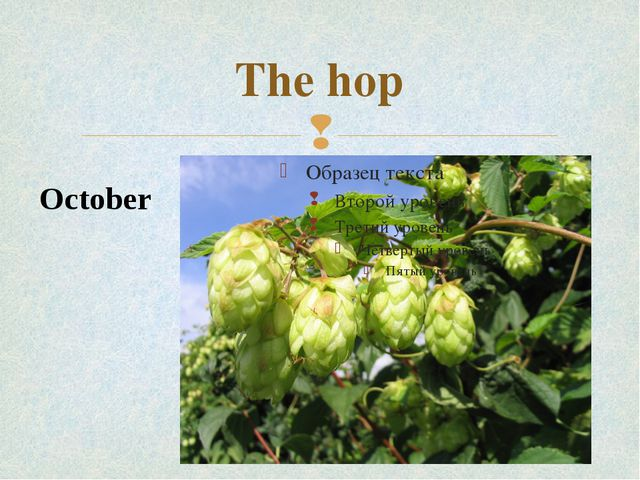 The hop October 