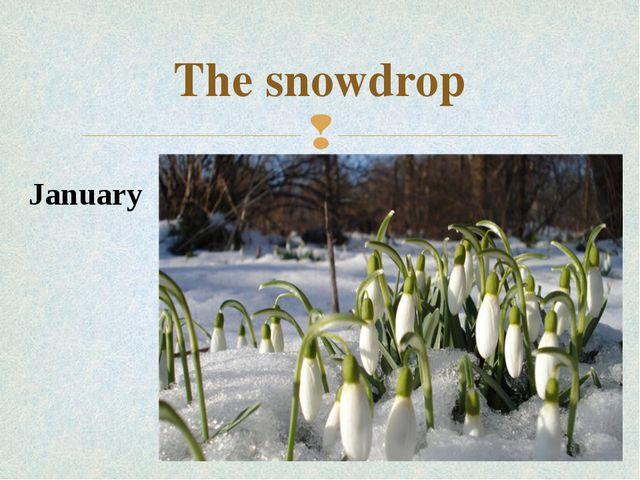 The snowdrop January 