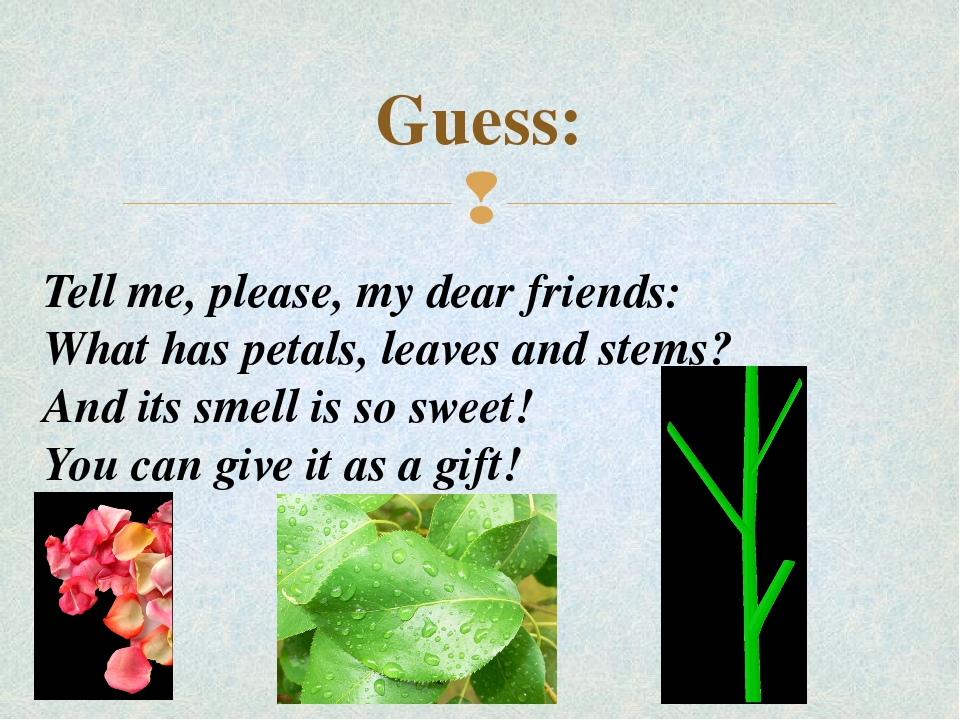 Guess: Tell me, please, my dear friends: What has petals, leaves and stems? A...