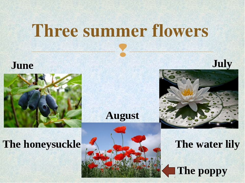 Three summer flowers June July August The poppy The water lily The honeysuckl...
