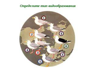 Долгоносик большой сосновый Долгоносик дубовый Определите тип видообразования