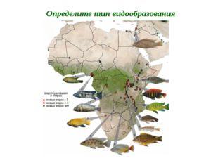 Определите тип видообразования Цихлиды озера Виктория (более 500 видов)