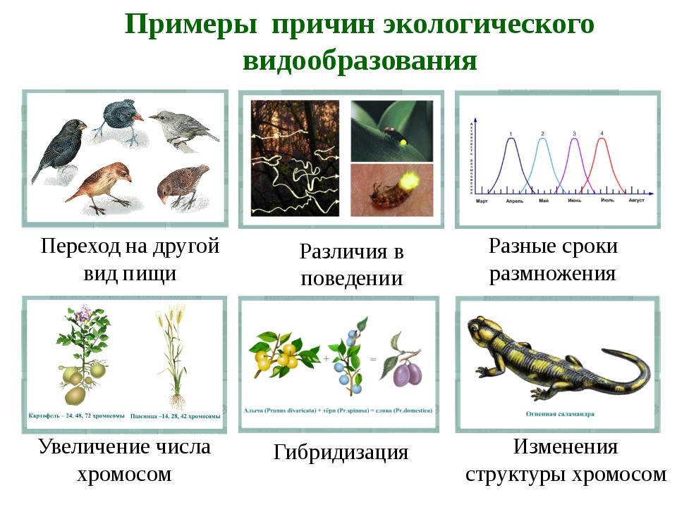 Определите правильную последовательность этапов экологического видообразовани...