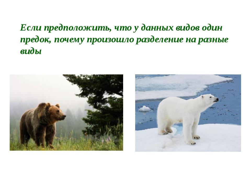 Если предположить, что у данных видов один предок, почему произошло разделени...