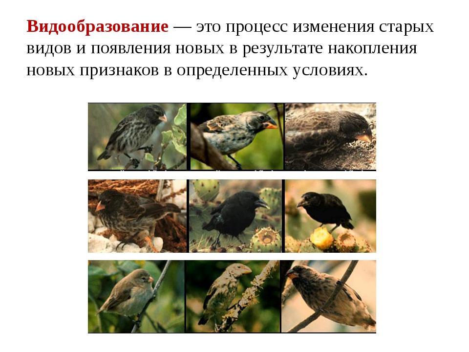 Видообразование — это процесс изменения старых видов и появления новых в резу...