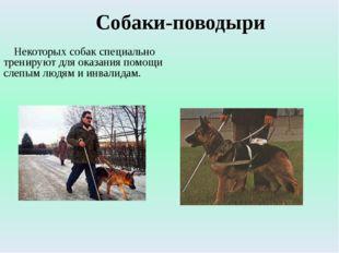 Собаки-поводыри Некоторых собак специально тренируют для оказания помощи слеп