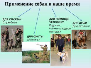 ДЛЯ СЛУЖБЫ Служебные ДЛЯ ОХОТЫ Охотничьи ДЛЯ ПОМОЩИ ЧЕЛОВЕКУ Ездовые, собаки