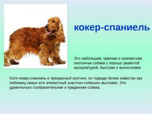 лайка Охотничья собака средних размеров со звонким голосом. С древнейших врем