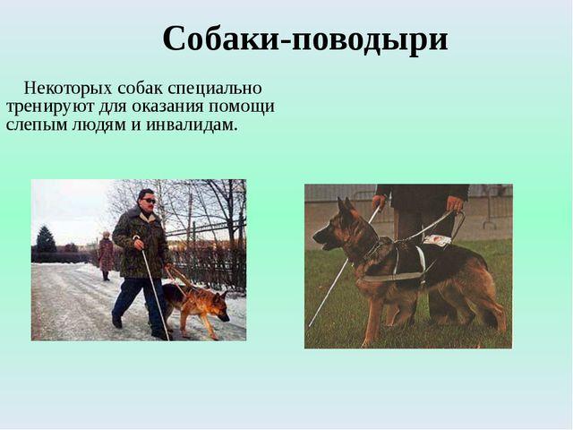 Собаки-поводыри Некоторых собак специально тренируют для оказания помощи слеп...