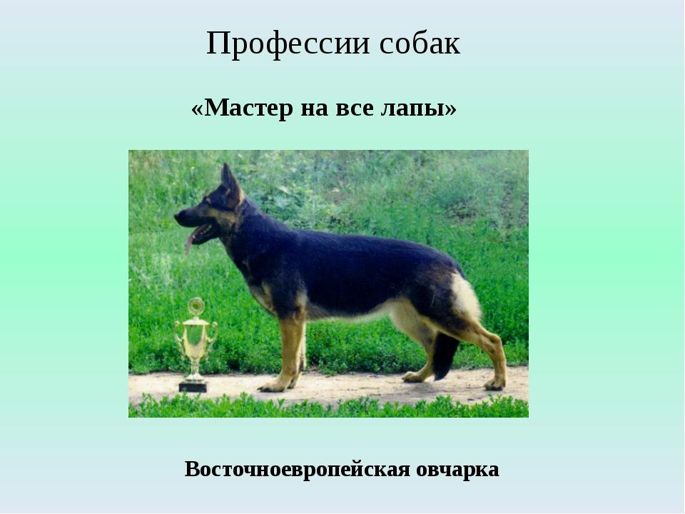«Мастер на все лапы» Профессии собак Восточноевропейская овчарка