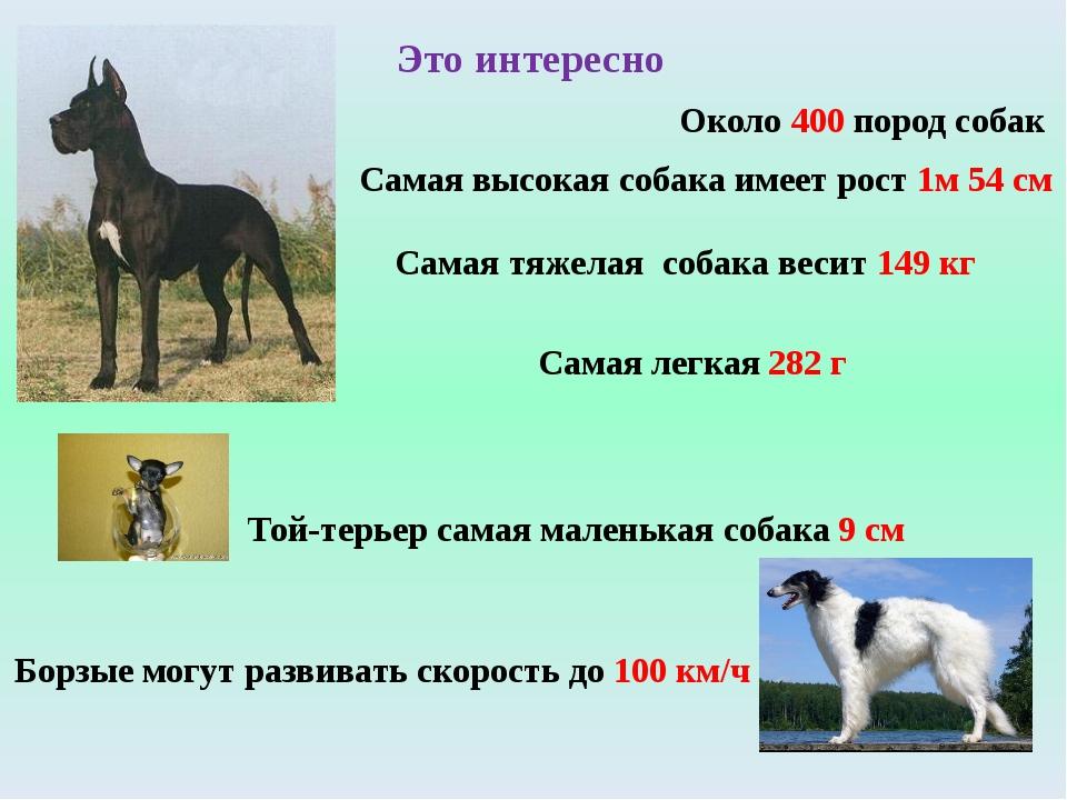 Это интересно Около 400 пород собак Самая высокая собака имеет рост 1м 54 см...