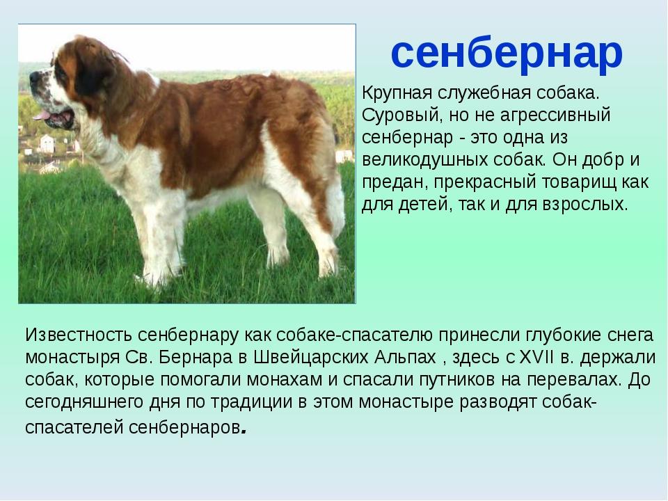 Породы собак Уход за собаками Собаки Второй мировой войны Стихи, сказки , ра...