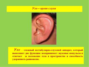 Ухо – орган слуха Ухо – сложный вестибулярно-слуховой аппарат, который выполн