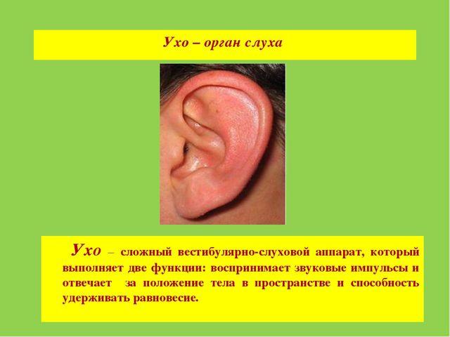 Ухо – орган слуха Ухо – сложный вестибулярно-слуховой аппарат, который выполн...