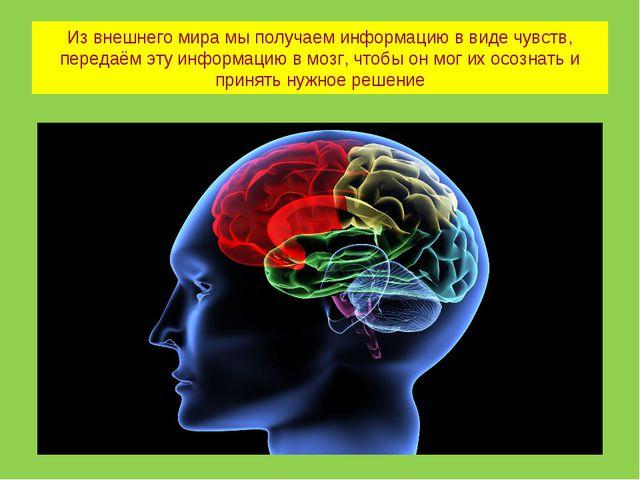 Из внешнего мира мы получаем информацию в виде чувств, передаём эту информаци...