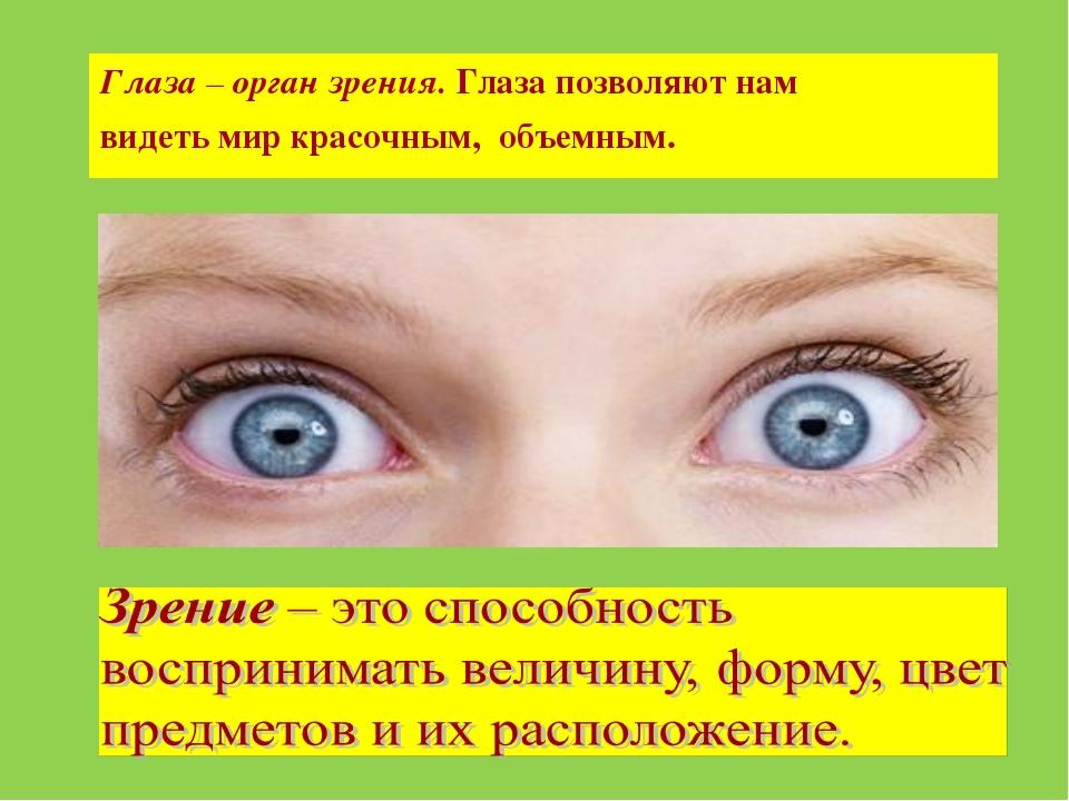Глаза – орган зрения. Глаза позволяют нам видеть мир красочным, объемным.