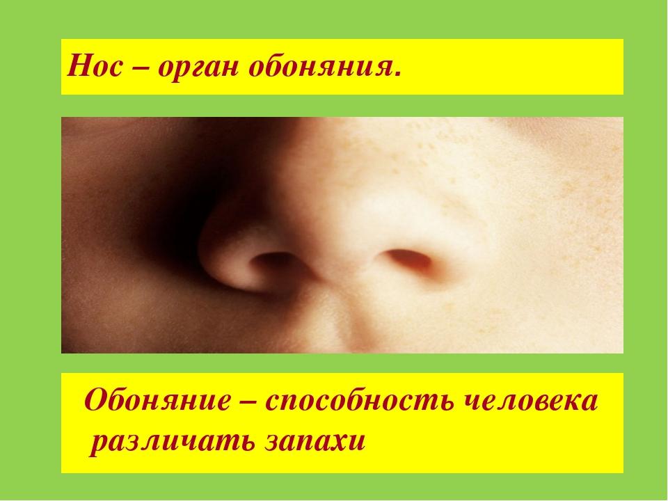 Нос – орган обоняния. Обоняние – способность человека различать запахи