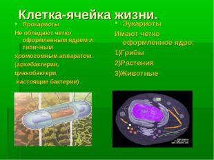 Клетка-ячейка жизни. Прокариоты Не обладают четко оформленным ядром и типичны