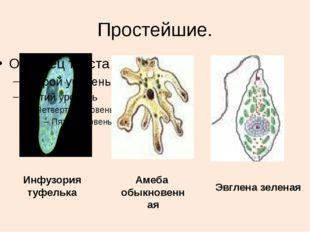 Простейшие. Инфузория туфелька Амеба обыкновенная Эвглена зеленая