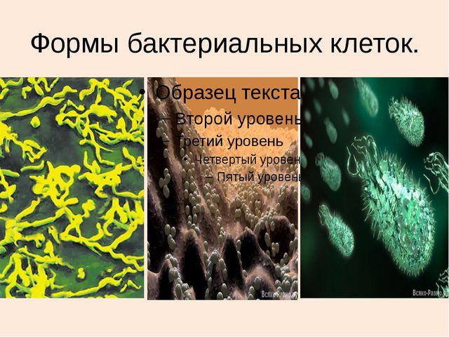 Формы бактериальных клеток.