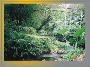 Природа Индии Джунгли