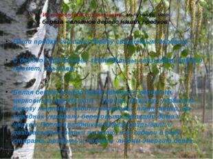 Из разговоров со старшими , мы узнали, что берёза – главное дерево наших пред