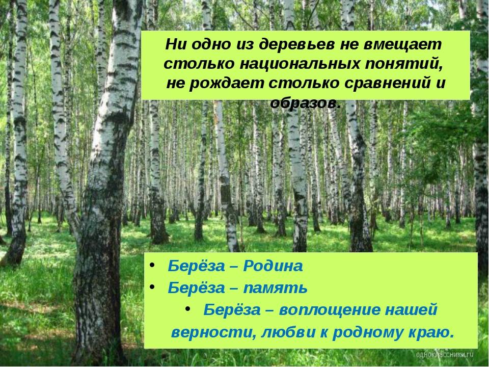 Ни одно из деревьев не вмещает столько национальных понятий, не рождает столь...