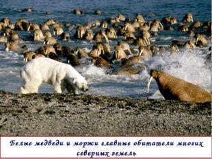 Белые медведи и моржи главные обитатели многих северных земель