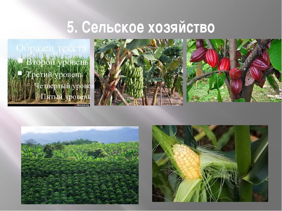 5. Сельское хозяйство