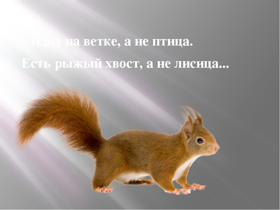 Сидит на ветке, а не птица. Есть рыжый хвост, а не лисица...