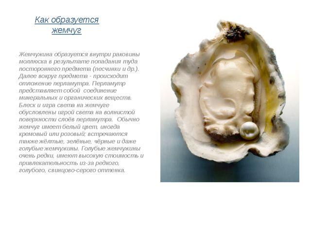 Как образуется жемчуг Жемчужина образуется внутри раковины моллюска в результ...