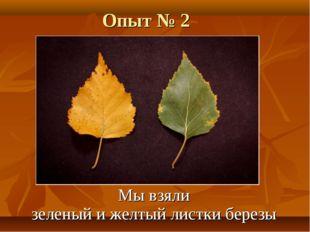 Опыт № 2 Мы взяли зеленый и желтый листки березы
