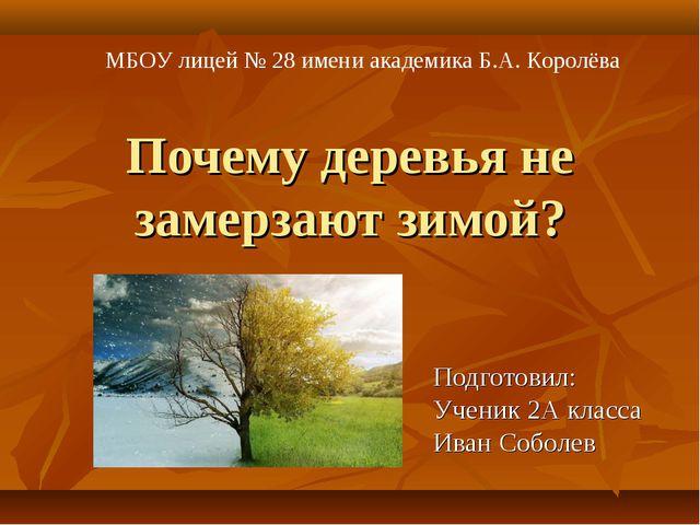 Почему деревья не замерзают зимой? Подготовил: Ученик 2А класса Иван Соболев...