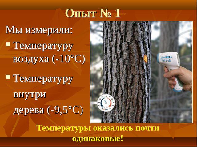 Опыт № 1 Мы измерили: Температуру воздуха (-10°С) Температуру внутри дерева (...