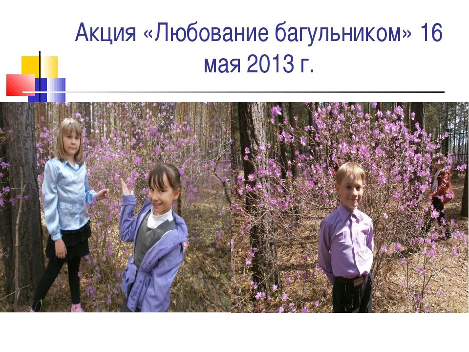 Акция «Любование багульником» 16 мая 2013 г.