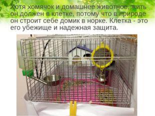 Хотя хомячок и домашнее животное, жить он должен в клетке, потому что в прир
