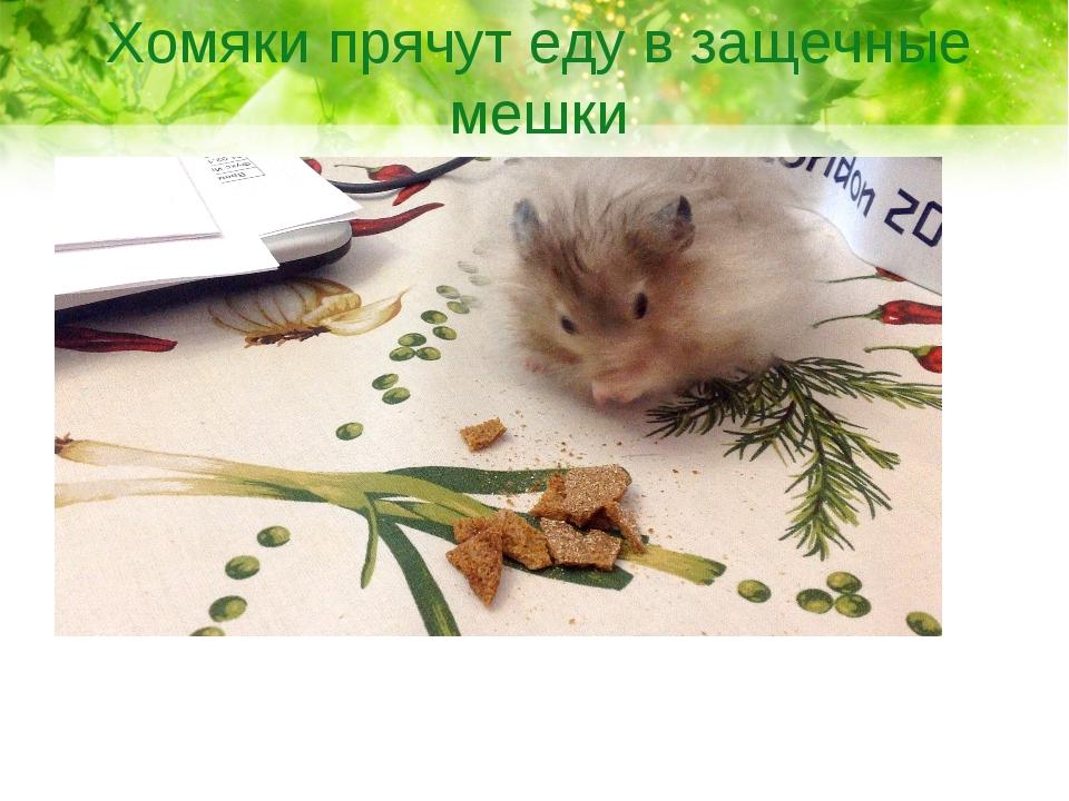 Хомяки прячут еду в защечные мешки
