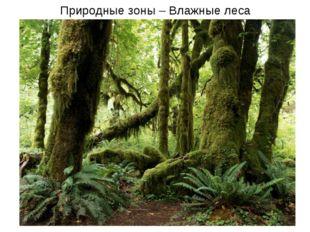 Природные зоны – Влажные леса