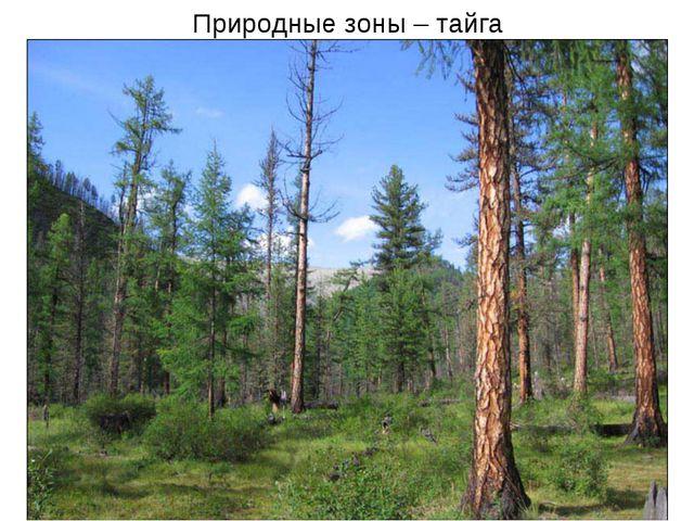 Природные зоны – тайга