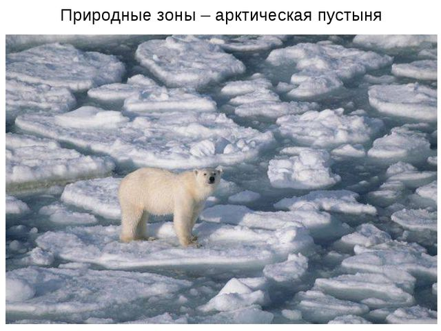 Природные зоны – арктическая пустыня