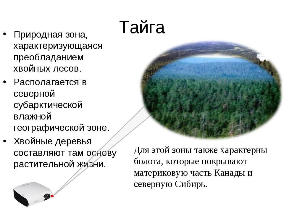 Тайга Природная зона, характеризующаяся преобладанием хвойных лесов. Располаг...