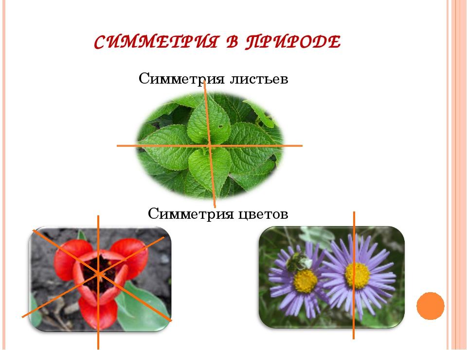 СИММЕТРИЯ В ПРИРОДЕ Симметрия листьев Симметрия цветов