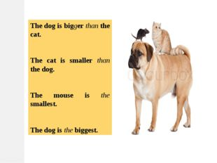 The dog is bigger than the cat. The cat is smaller than the dog. The mouse is