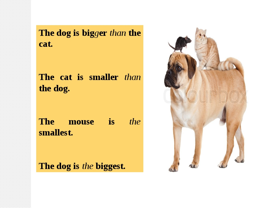 The dog is bigger than the cat. The cat is smaller than the dog. The mouse is...