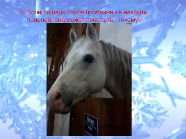 5. Если лошадь после пробежки не накрыть попоной, она может простыть. Почему?