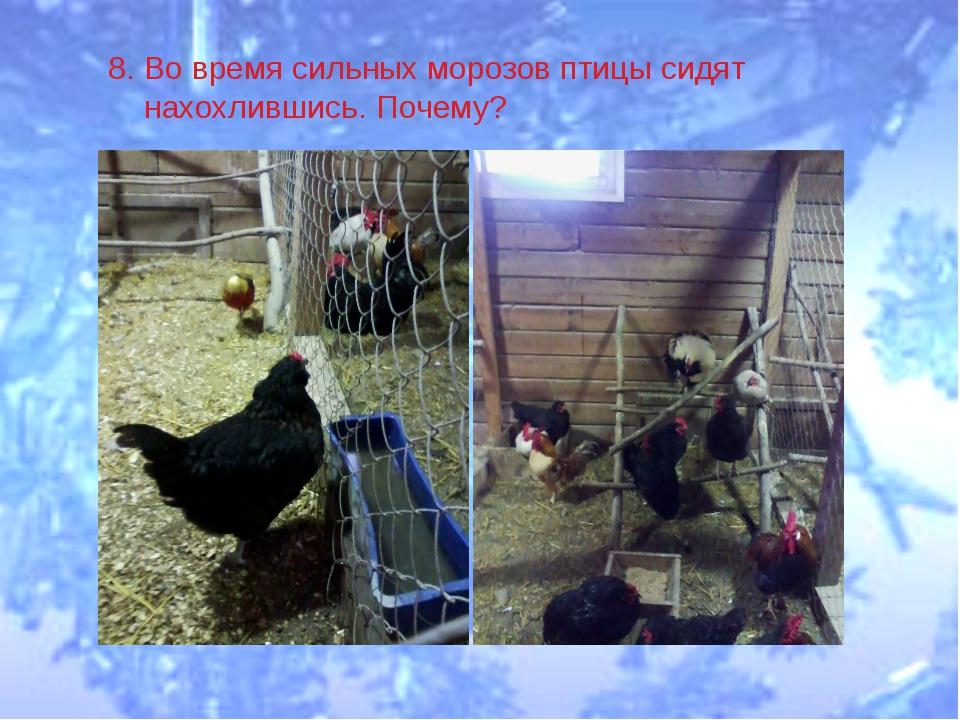 8. Во время сильных морозов птицы сидят нахохлившись. Почему?