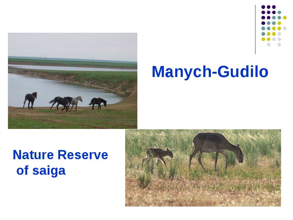 Manych-Gudilo Nature Reserve of saiga